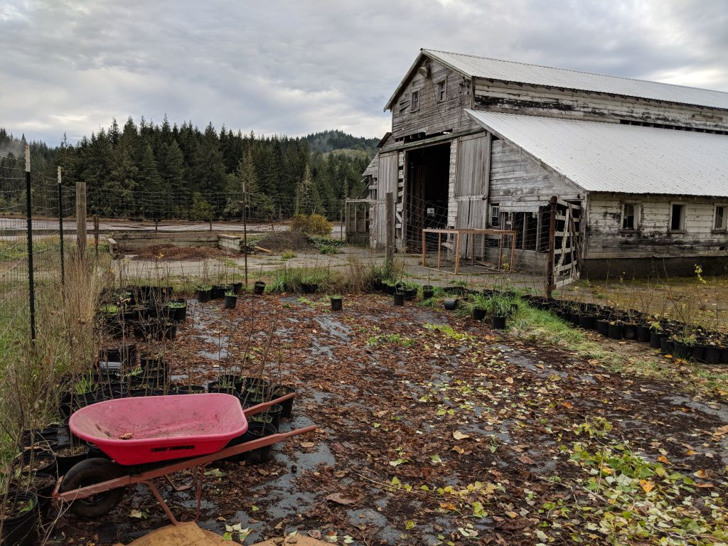 Matson Creek Wetland Preserve