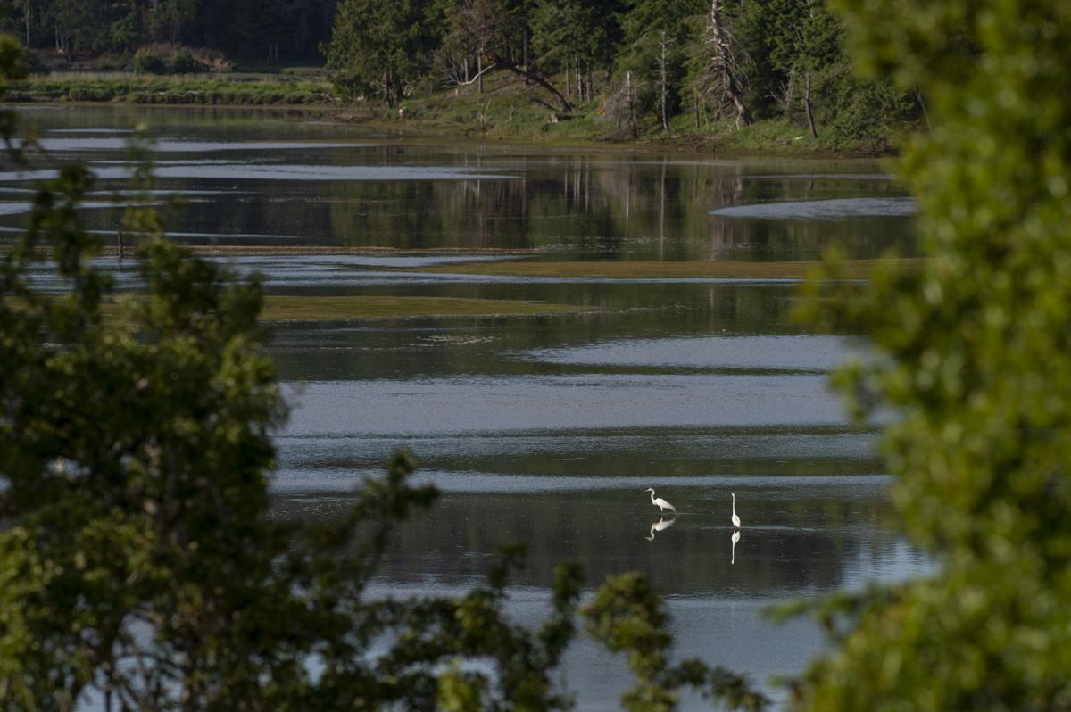 Coos Bay Estuary Mapping