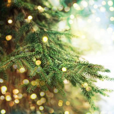 Christmas Forest.Siskiyou National Forest Christmas Tree Permits Are Now
