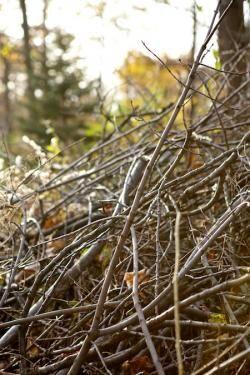 Brush and yard debris pick-up
