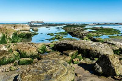 Tidepools at Otter Rock