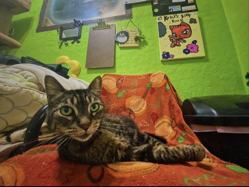 Kohl's Cat House