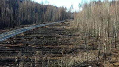Aerial -burned forest 1.jpg