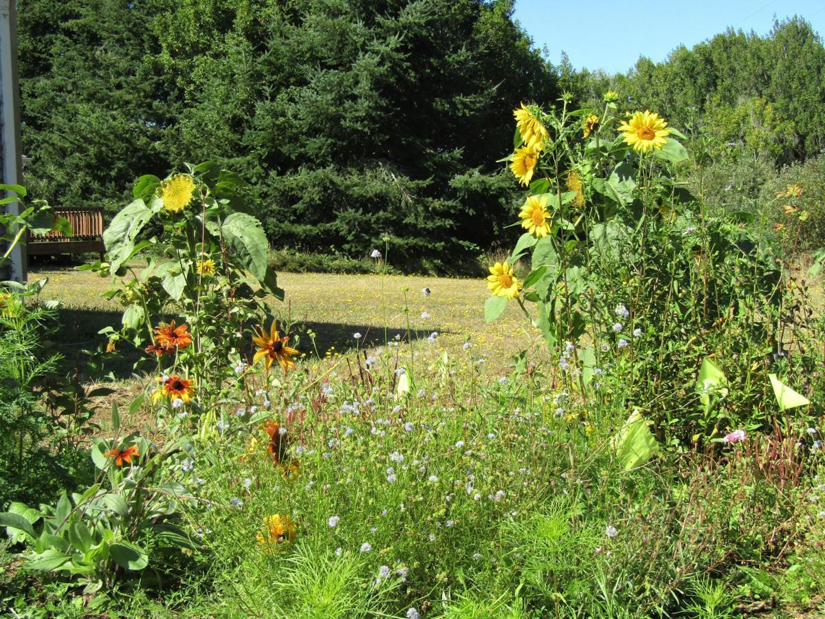 New pollinator garden