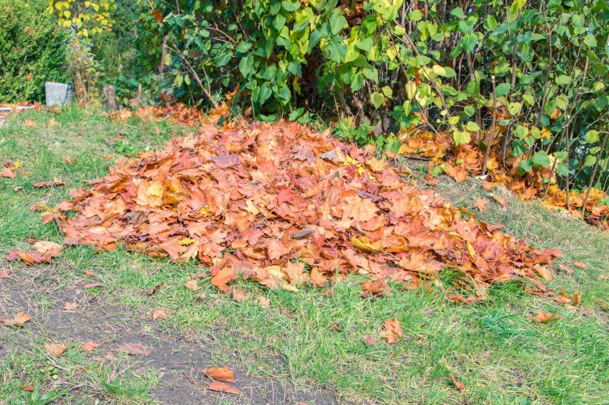 866547692 pile of leaves
