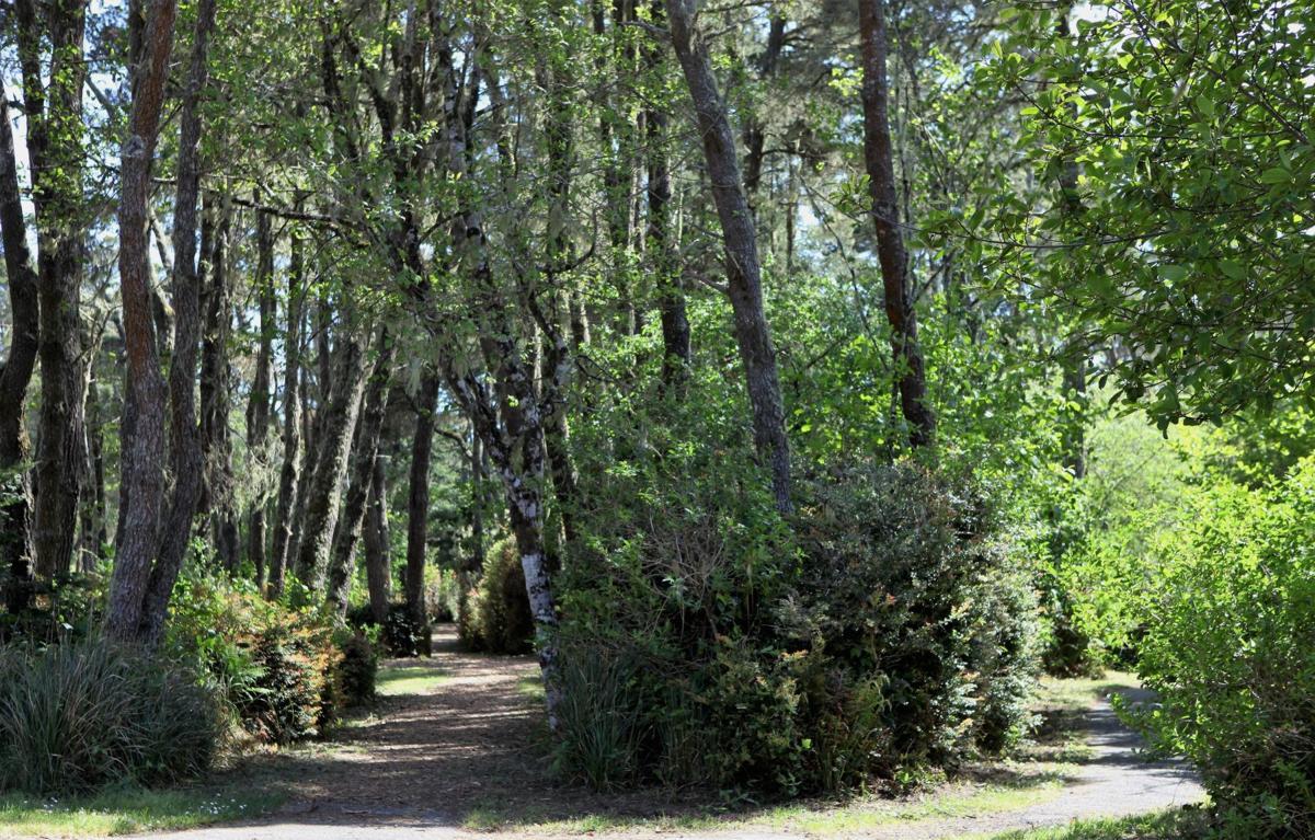 Trails at Bullards Beach State Park