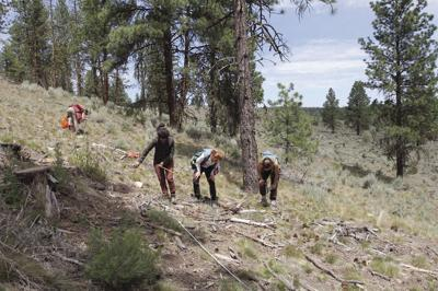 Removing undergrowth