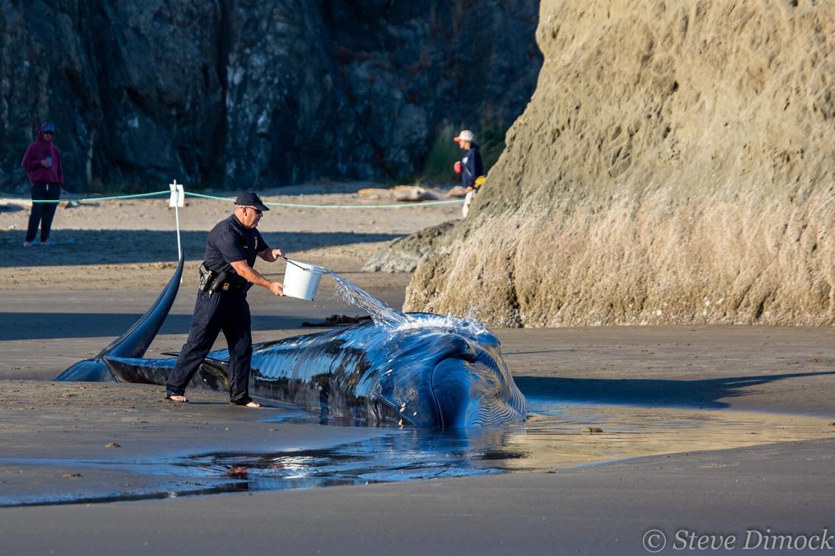 Bandon beached whale 2