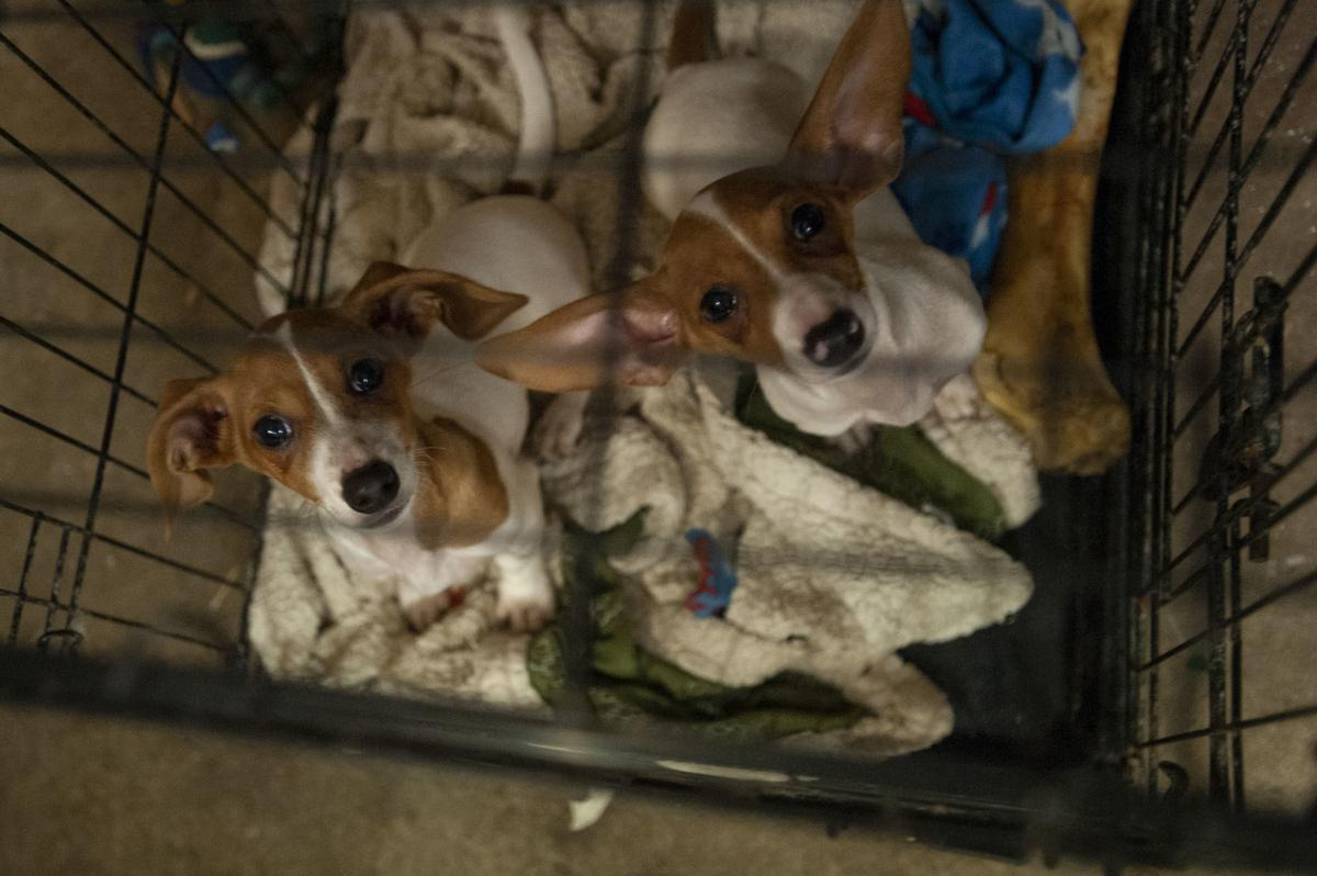 Bandon Animal Rescue