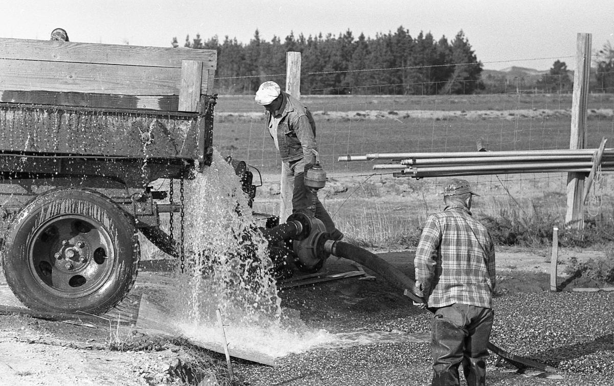 Bob Schultz with cranberry pump Oct. 1961