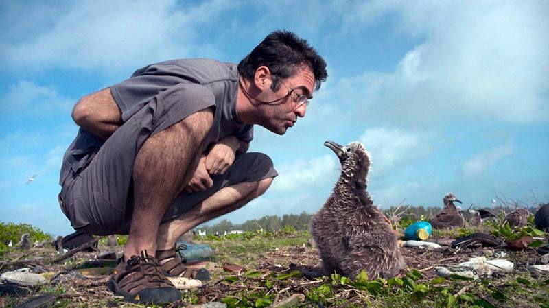 'Albatross' the film