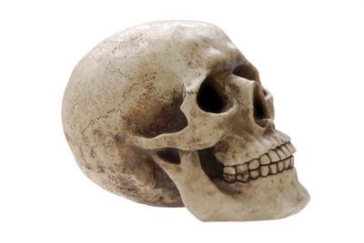 Human Skull Profile