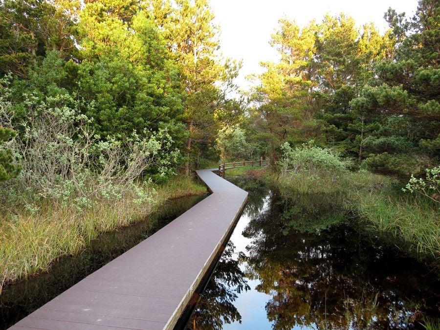 First Day Hikes: Bullards Beach State Park, Pearl's Trail, Bandon
