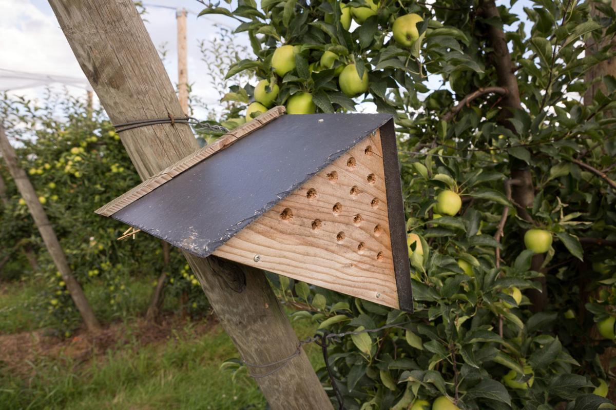 860663868 mason bee house