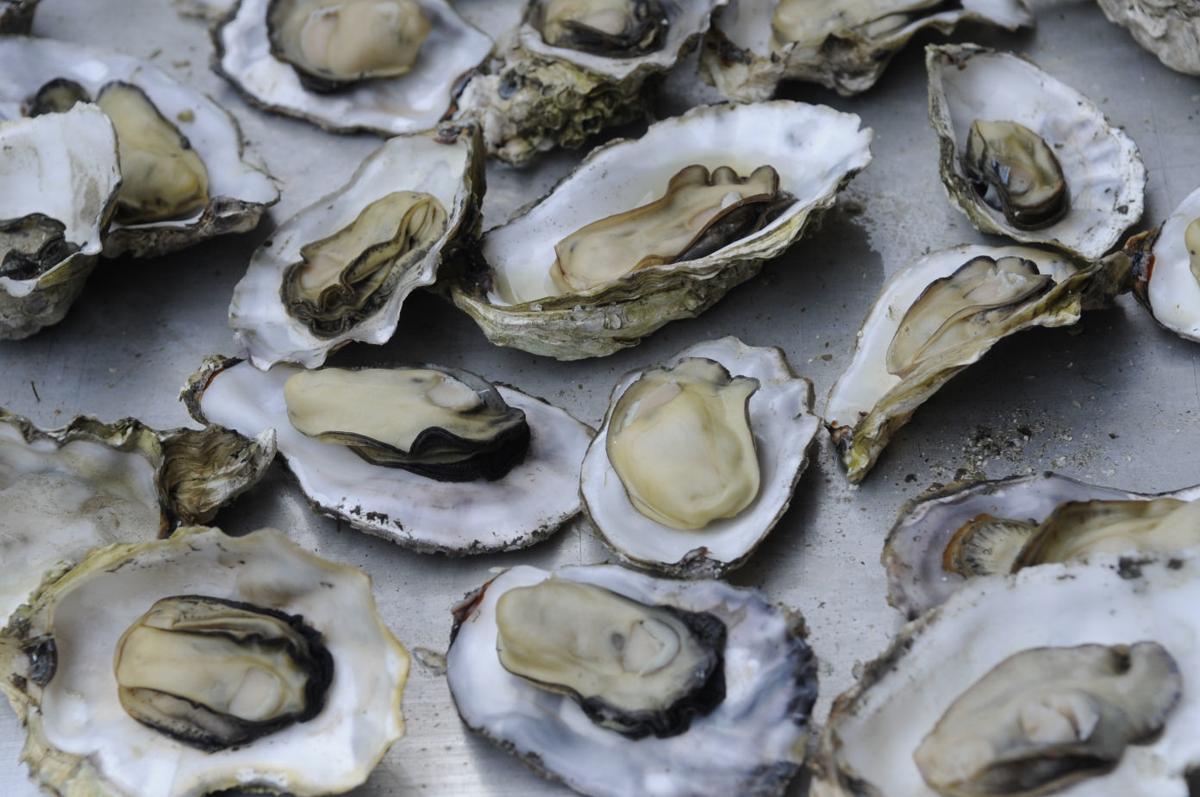 Ahh Shucks! Oyster Feed