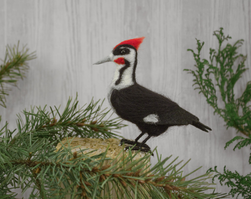 pileated woodpecker Suzanne Moulton
