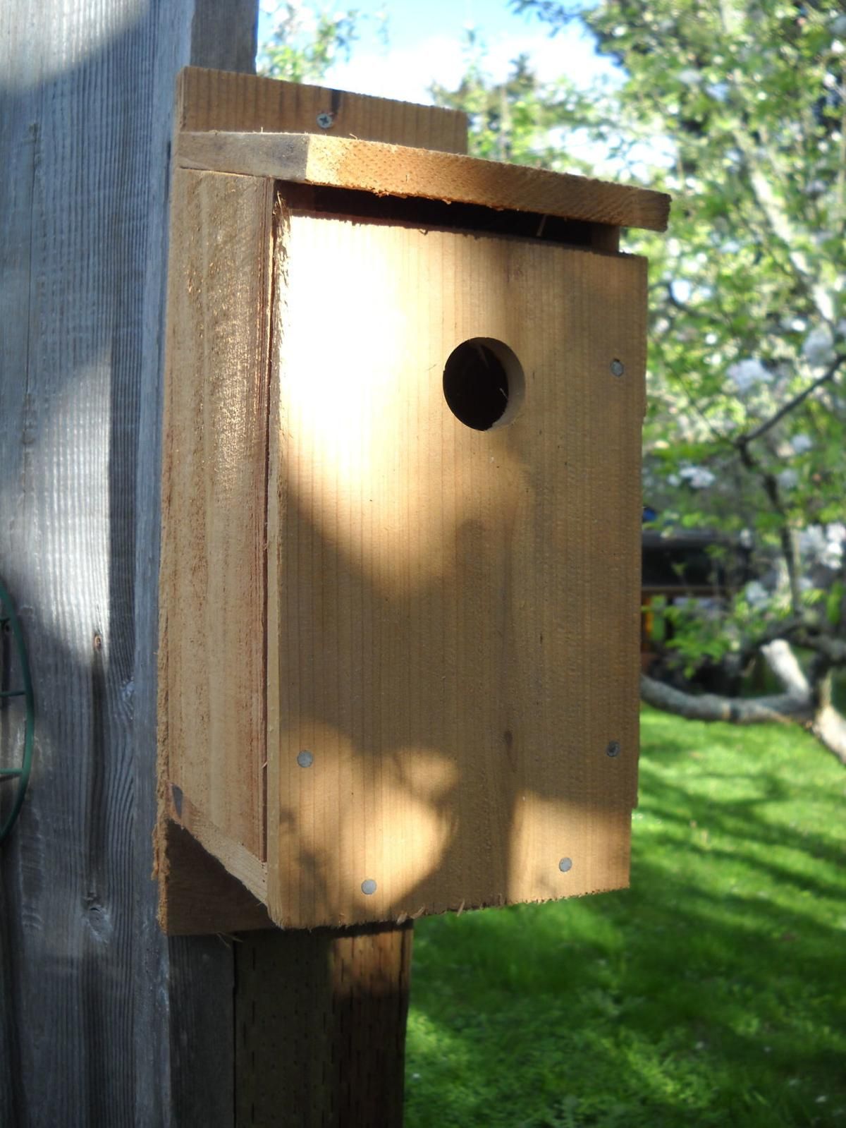 Build a bird house at museum