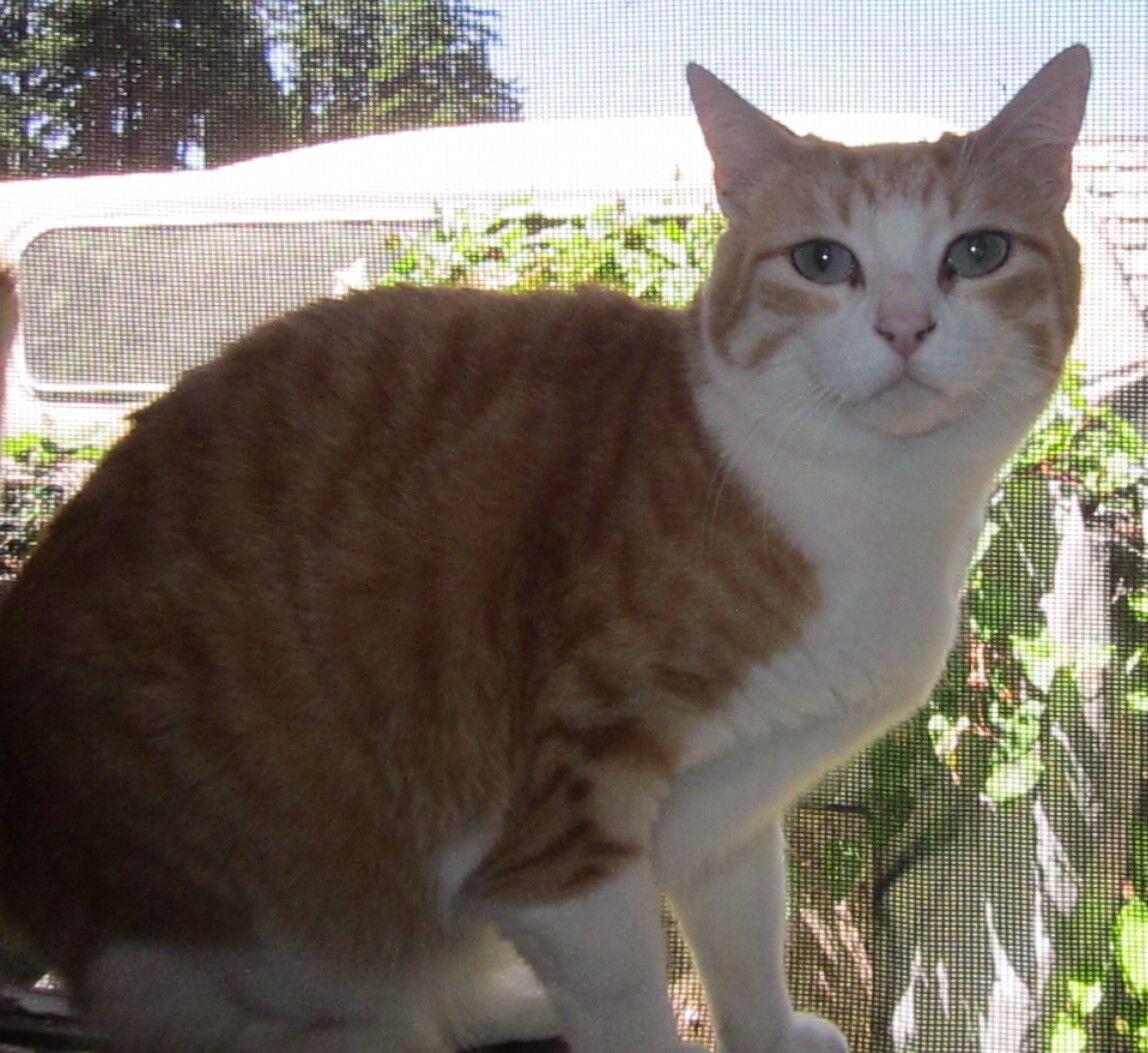 Kohl's Cat House - Missy