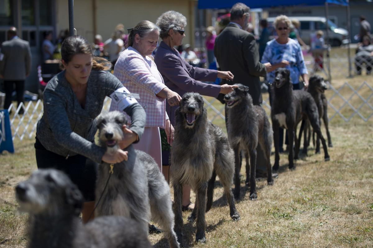 Coos Kennel Club AKC All-Breed Dog Show
