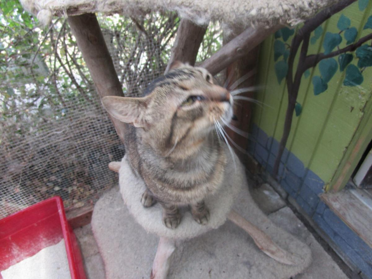 Kohl's Cat House - Buddy