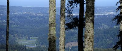 Blue Ridge Timber