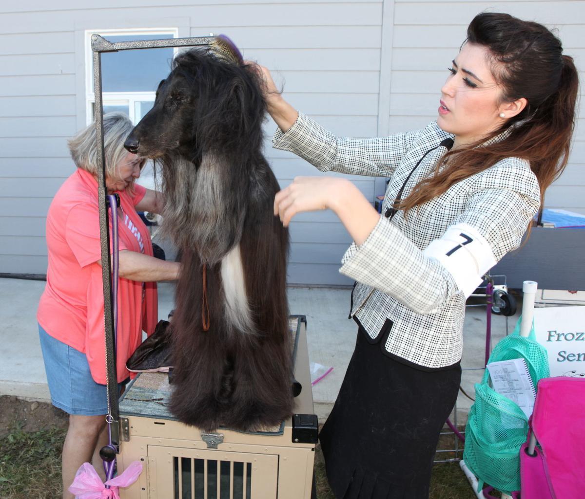 Dog salon