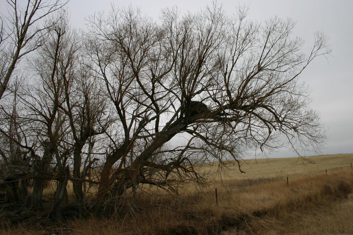 tree geese