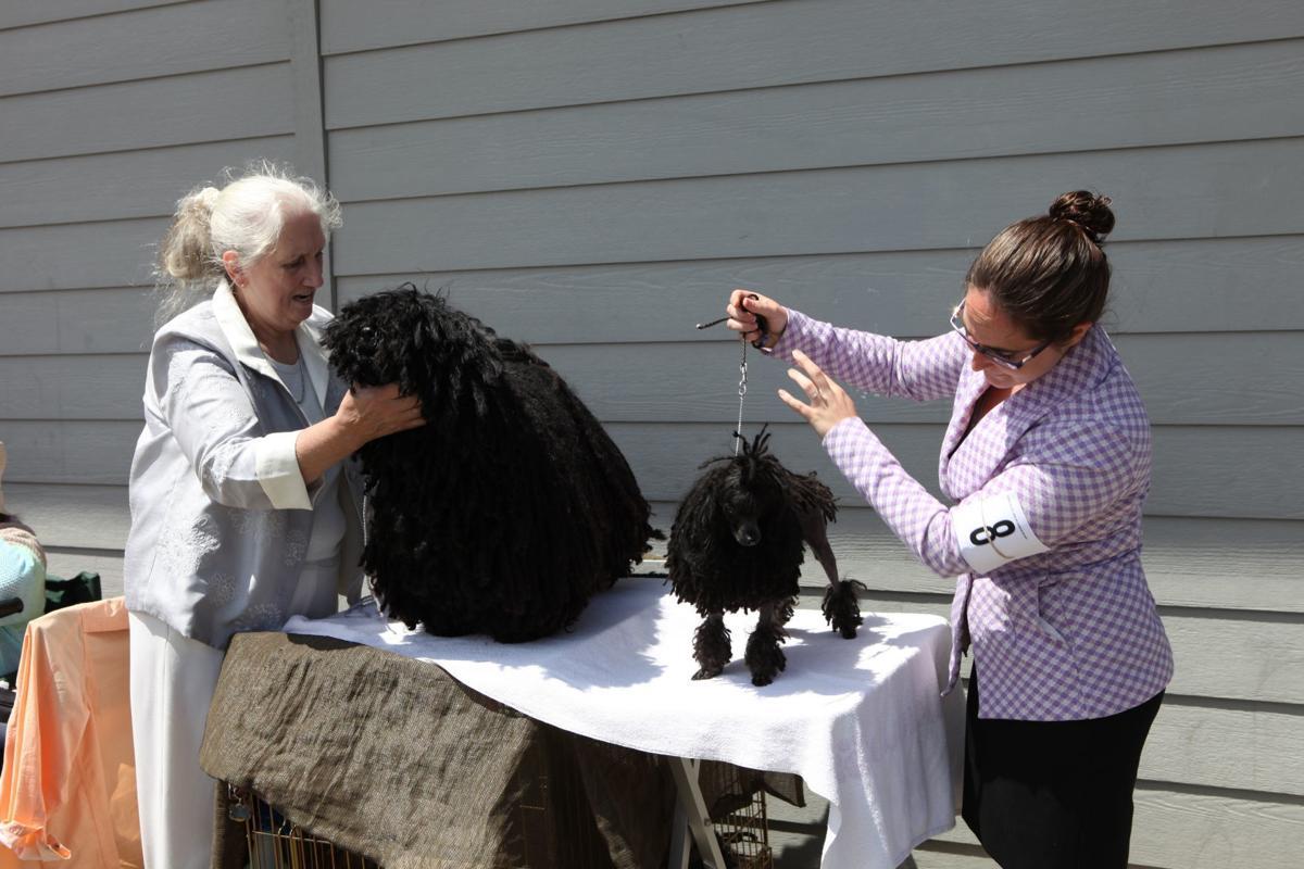 Coos Kennel Club Dog Show