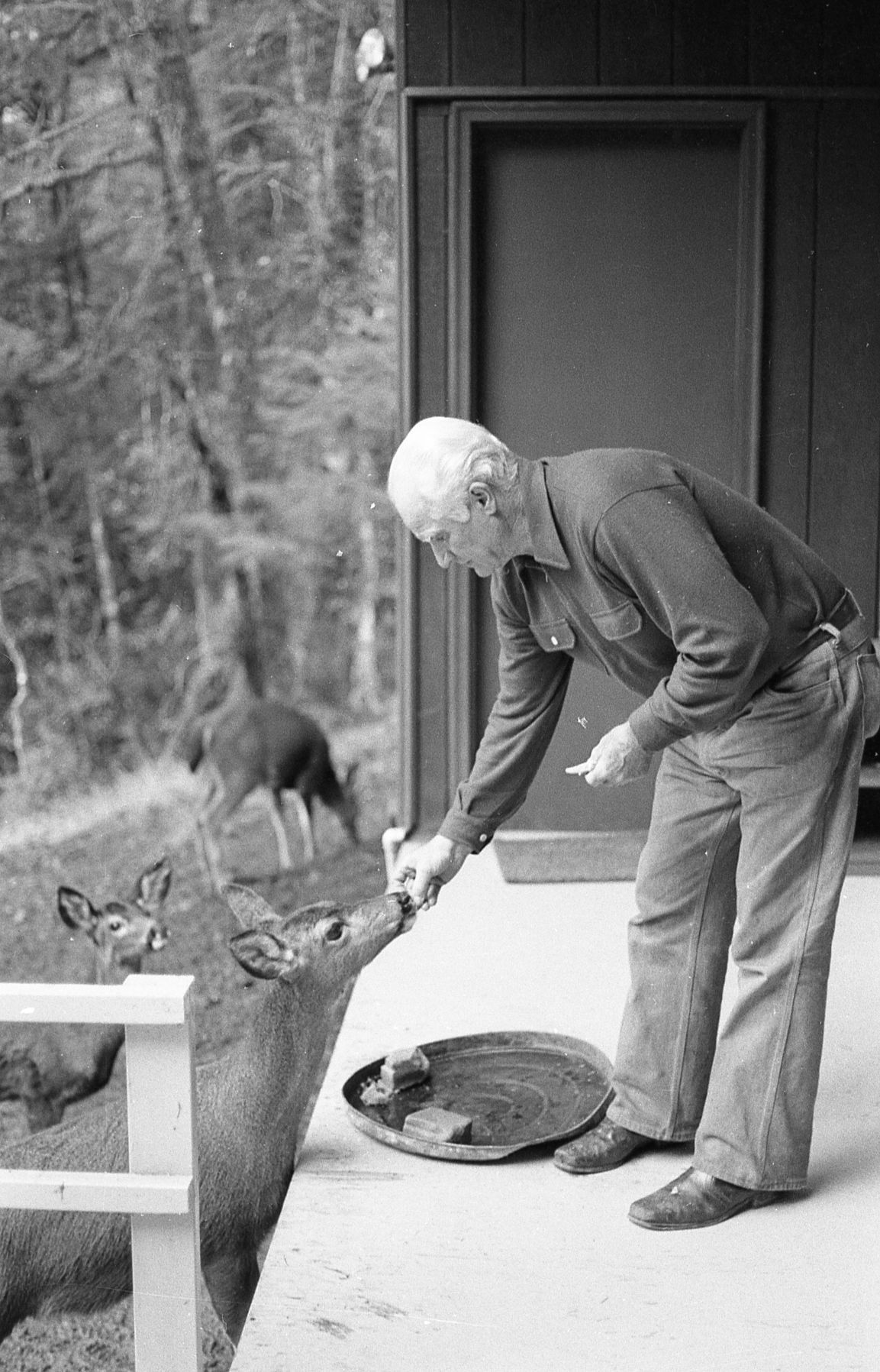 MLB baseball player Bobby Doerr feeding deer at his house at Agness, early 1980s