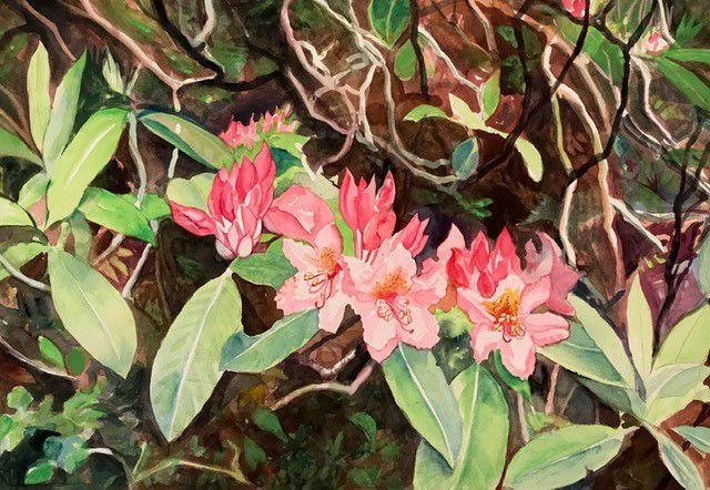 Rhodys watercolor by Victoria Tierney