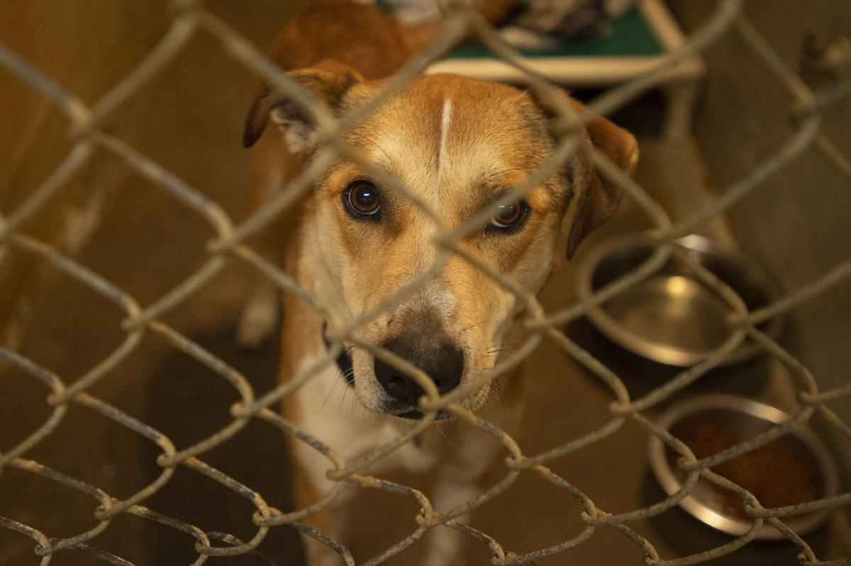 Coos County Animal Shelter Closure
