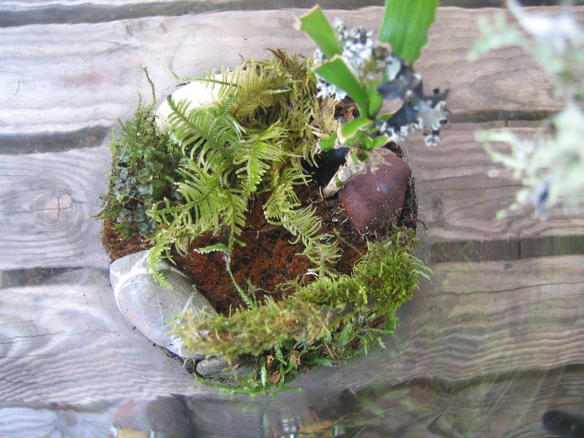 mossarium looking down