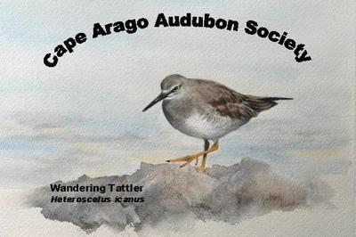 Cape Arago Audubon Society birding event