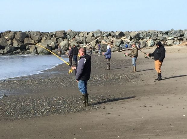 Surf perch fishing popular at south jetty sports for Jetty fishing oregon