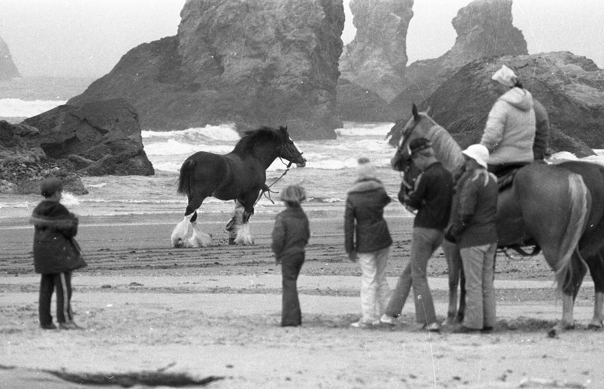 Budweiser Clydesdale commercial featuring Baron, July 1981