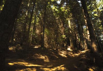 Whiskey Run Mountain Biking Trails to open Saturday