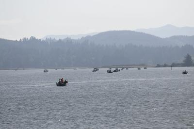 Salmon Search