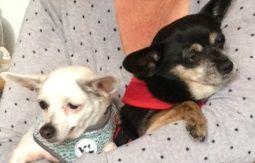 Coco & Rosie