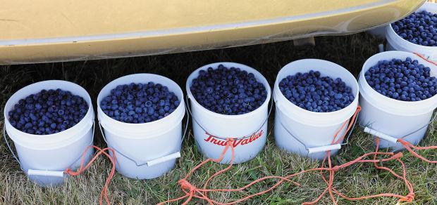 Blueberries C086.jpg