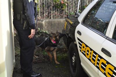 New coquille police dog