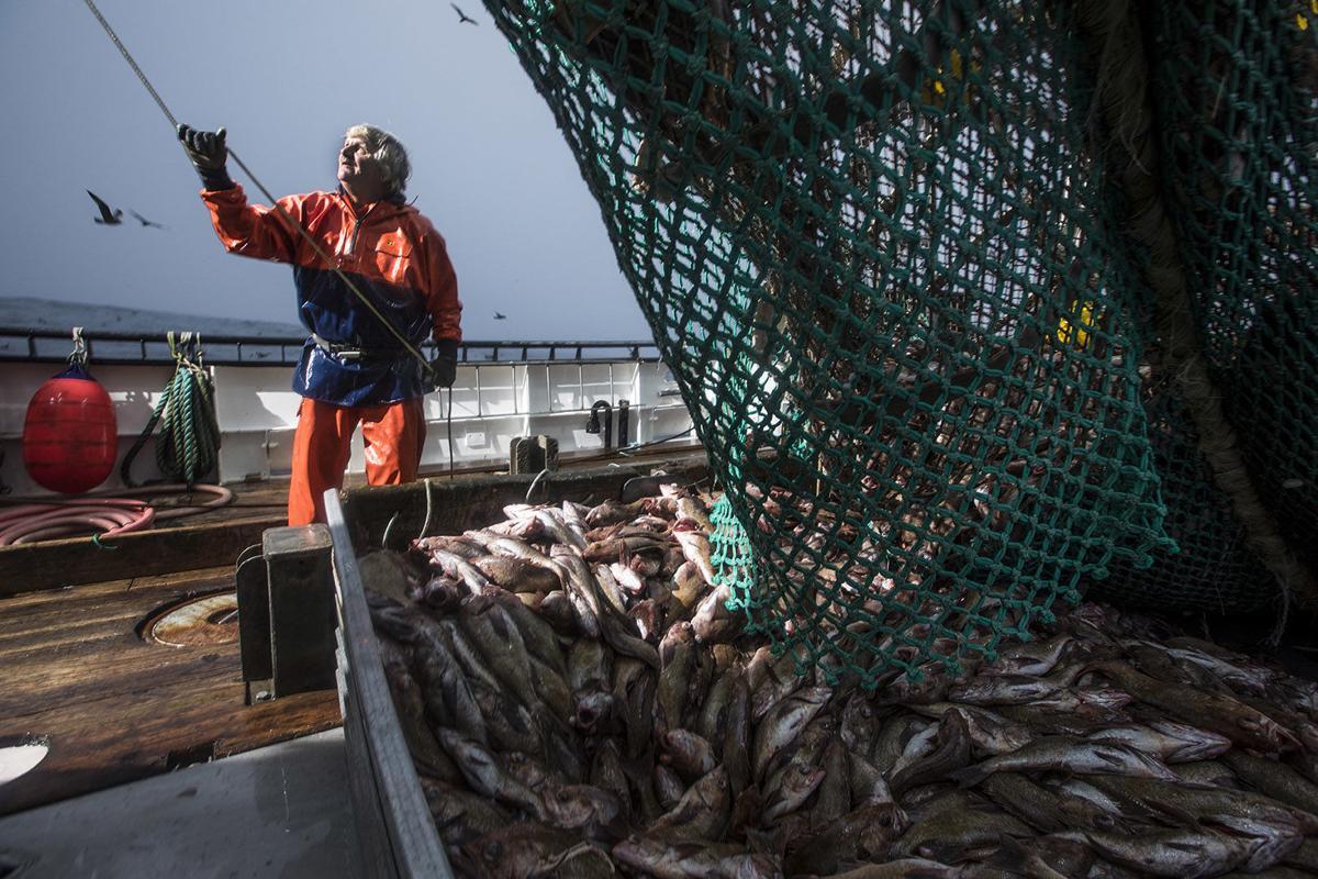EFP is renewing rockfish markets