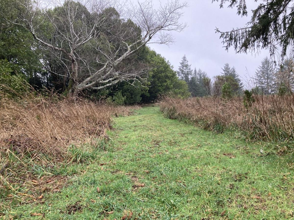 Myrtlewood Grove Nature Trail