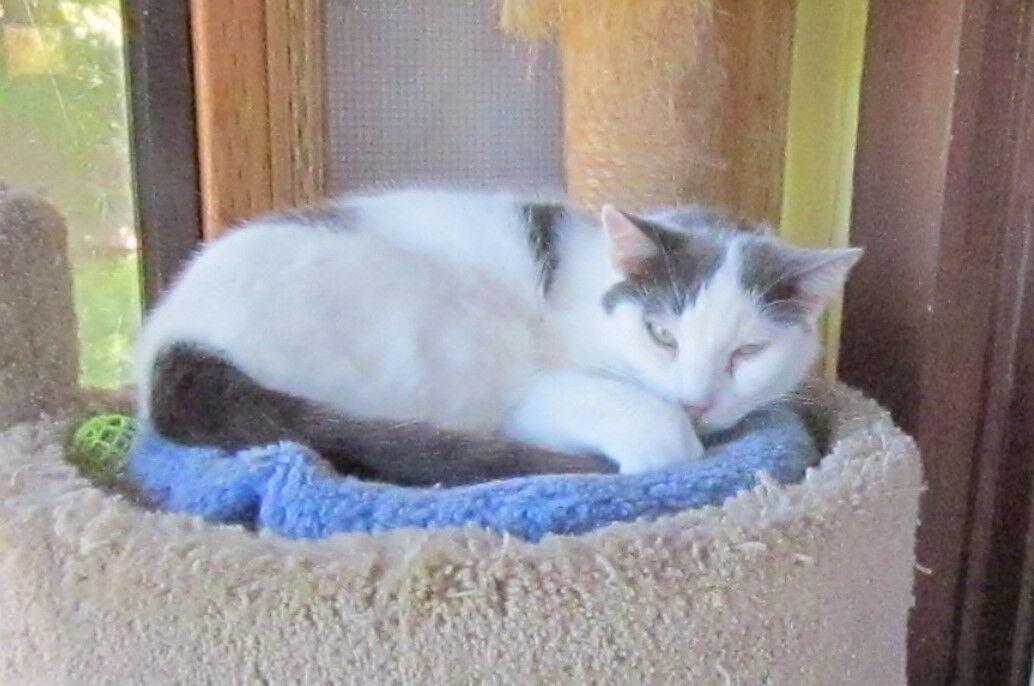 Kohl's Cat House - Sailor Jack