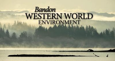 Bandon Environment STOCK