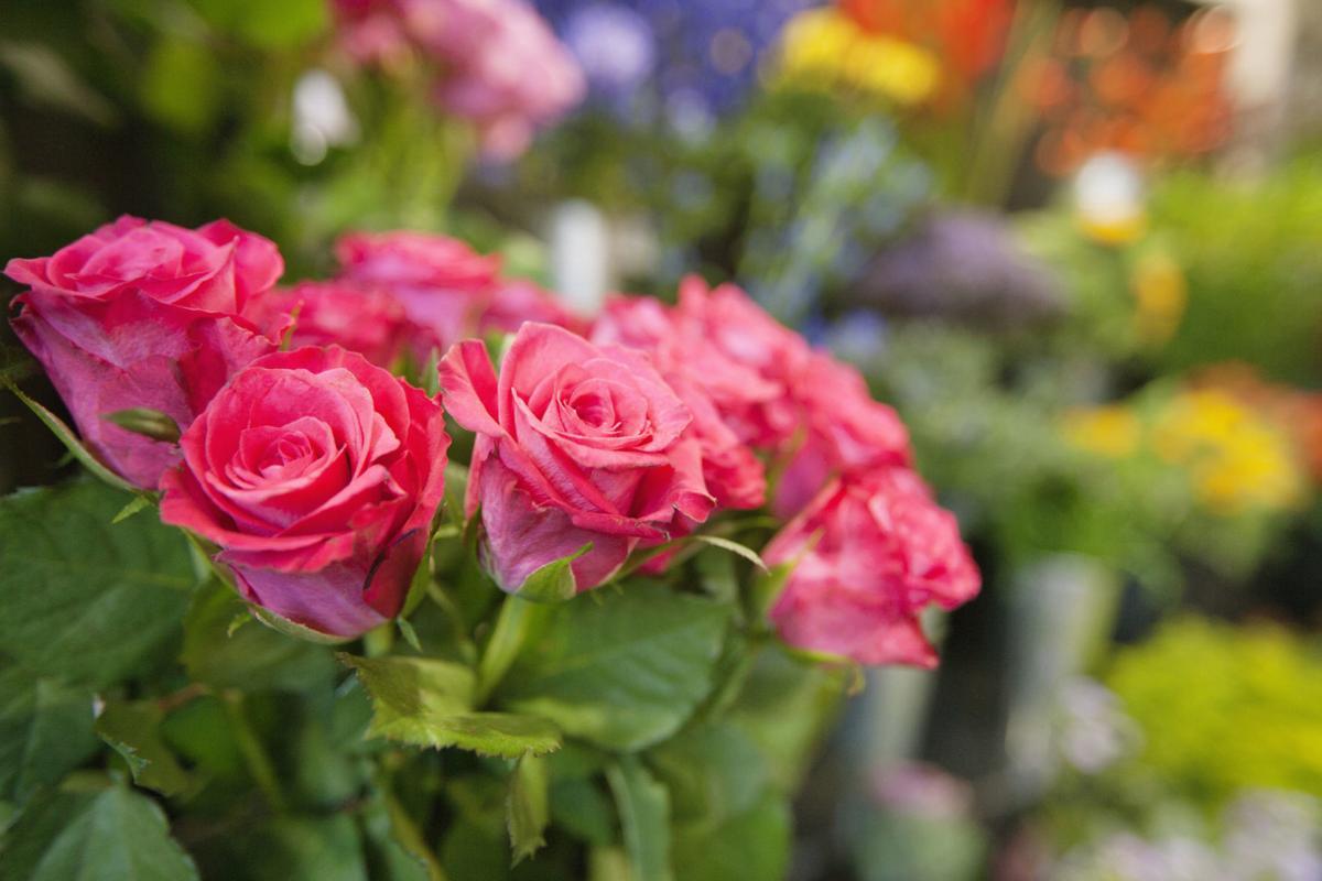143080374 roses