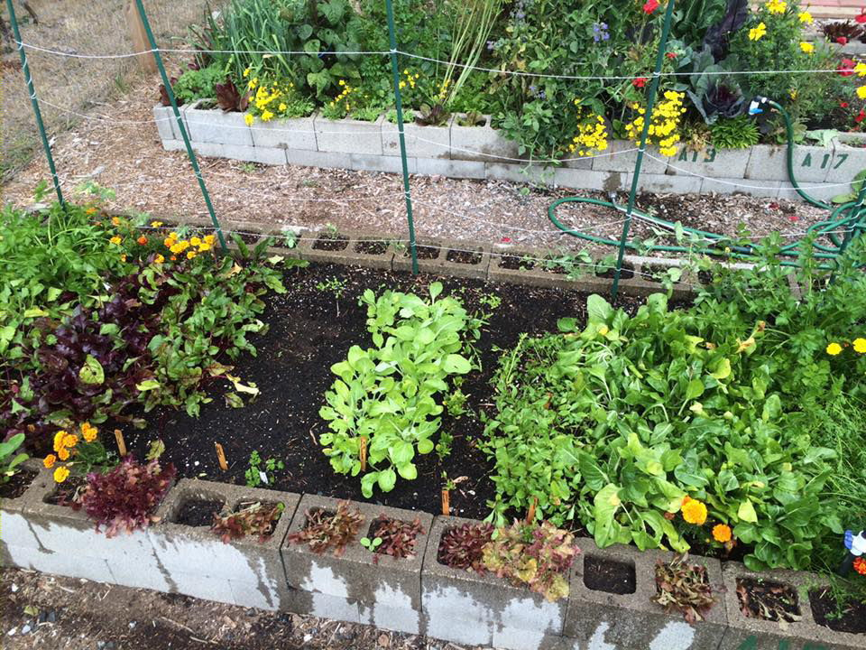 Good Earth Community Garden