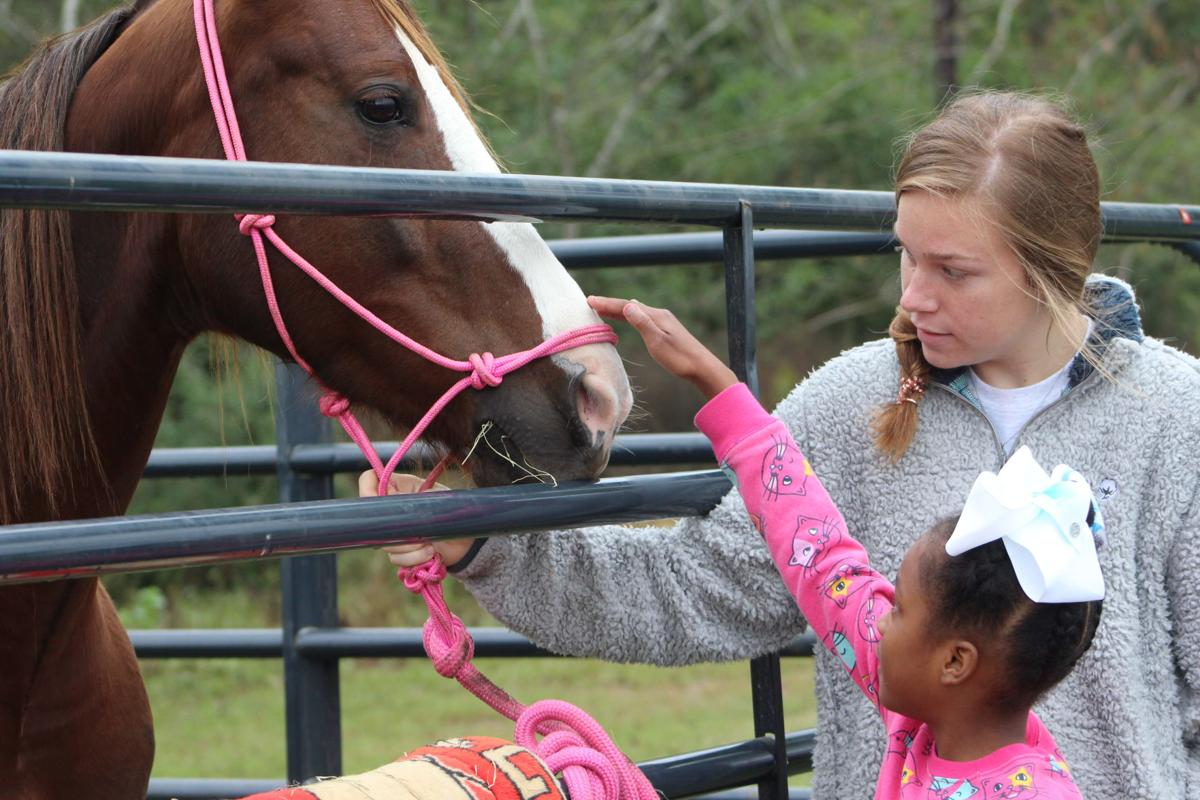 For some students this was their first face-to-face with a horse.