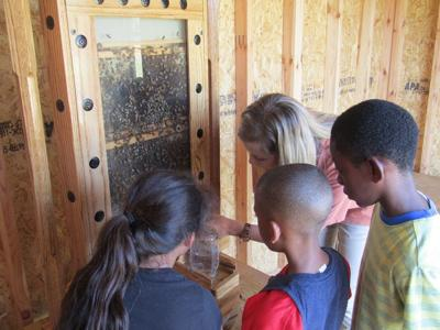 Destination Ag students explored the world of bees at the new observation beehive this year at ABAC's Georgia Museum of Agriculture and Historic Village.
