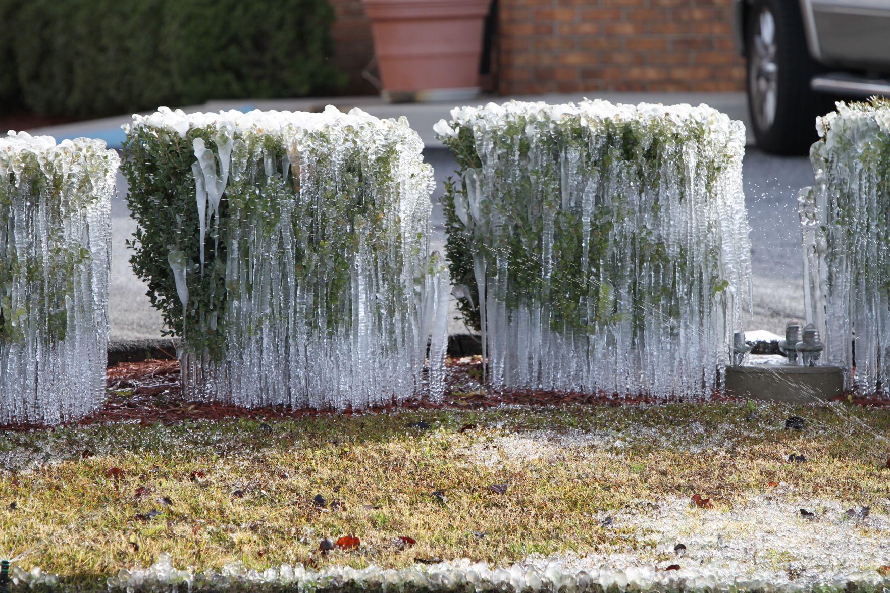 examples retirement letter%0A Frozen bushes