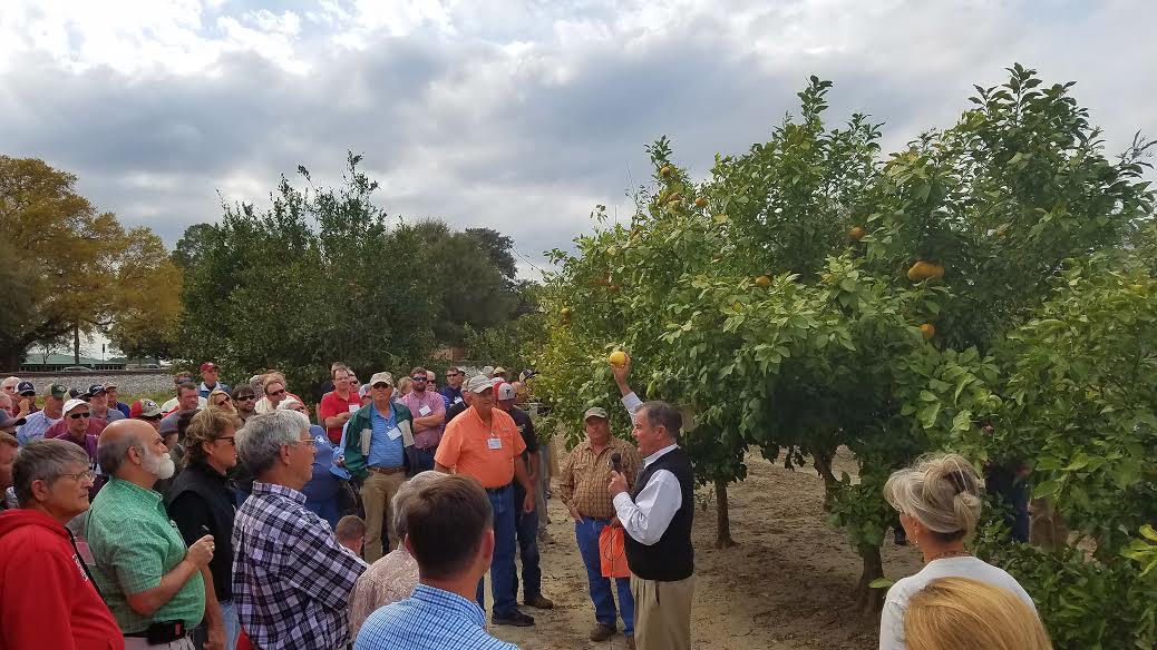 Georgia Citrus Association